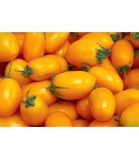 Pomidor żółty jajko kg