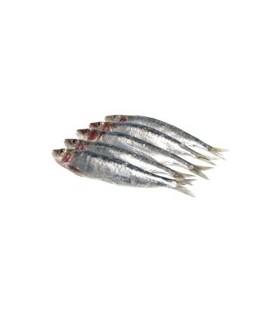 Ryby i przetwory rybne